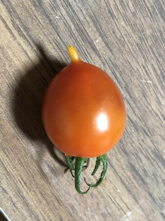 謎のトマト