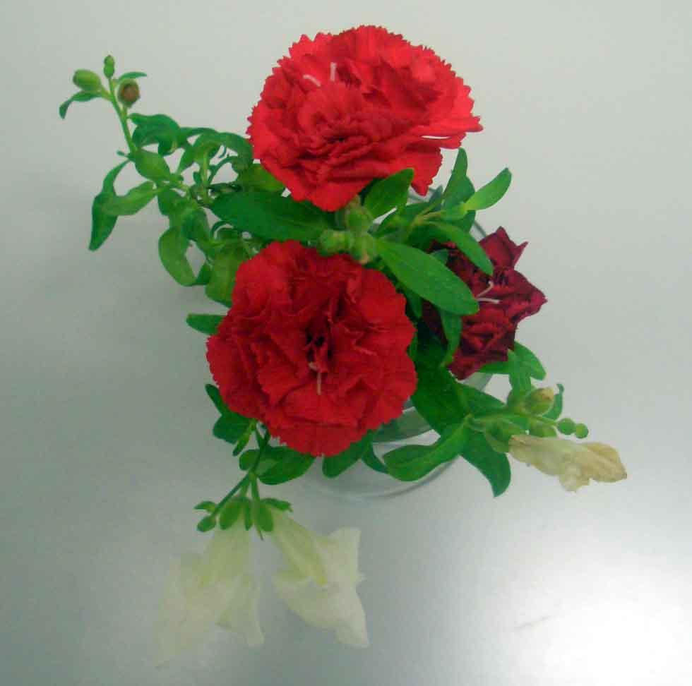 http://www.ige.tohoku.ac.jp/mirai/news/upload_items/201002/CIMG3389-2.jpg
