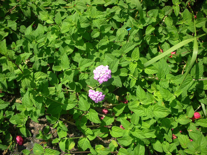 http://www.ige.tohoku.ac.jp/mirai/news/upload_items/201103/DSCN4482.JPG