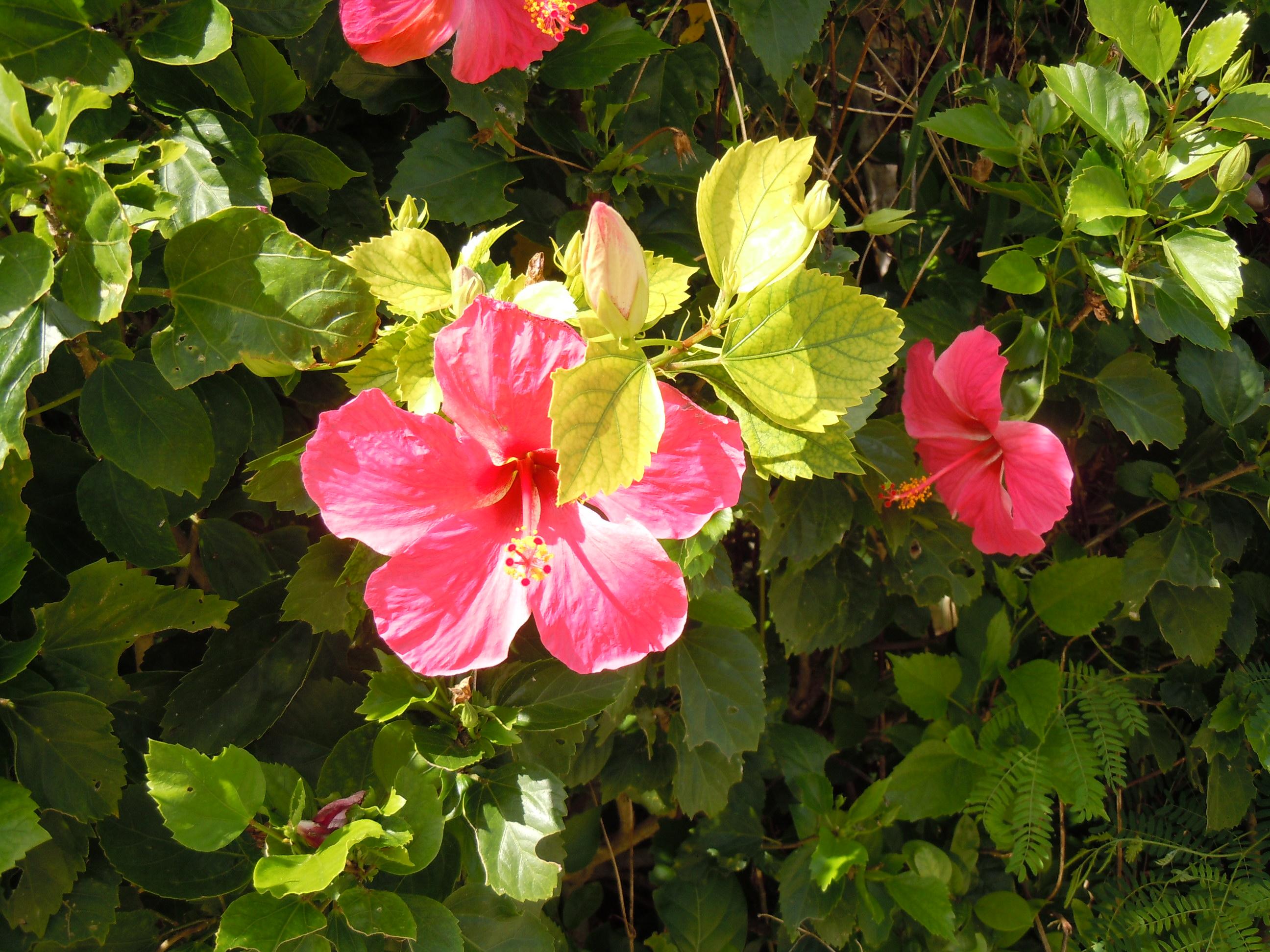 http://www.ige.tohoku.ac.jp/mirai/news/upload_items/201207/DSCN1645.JPG