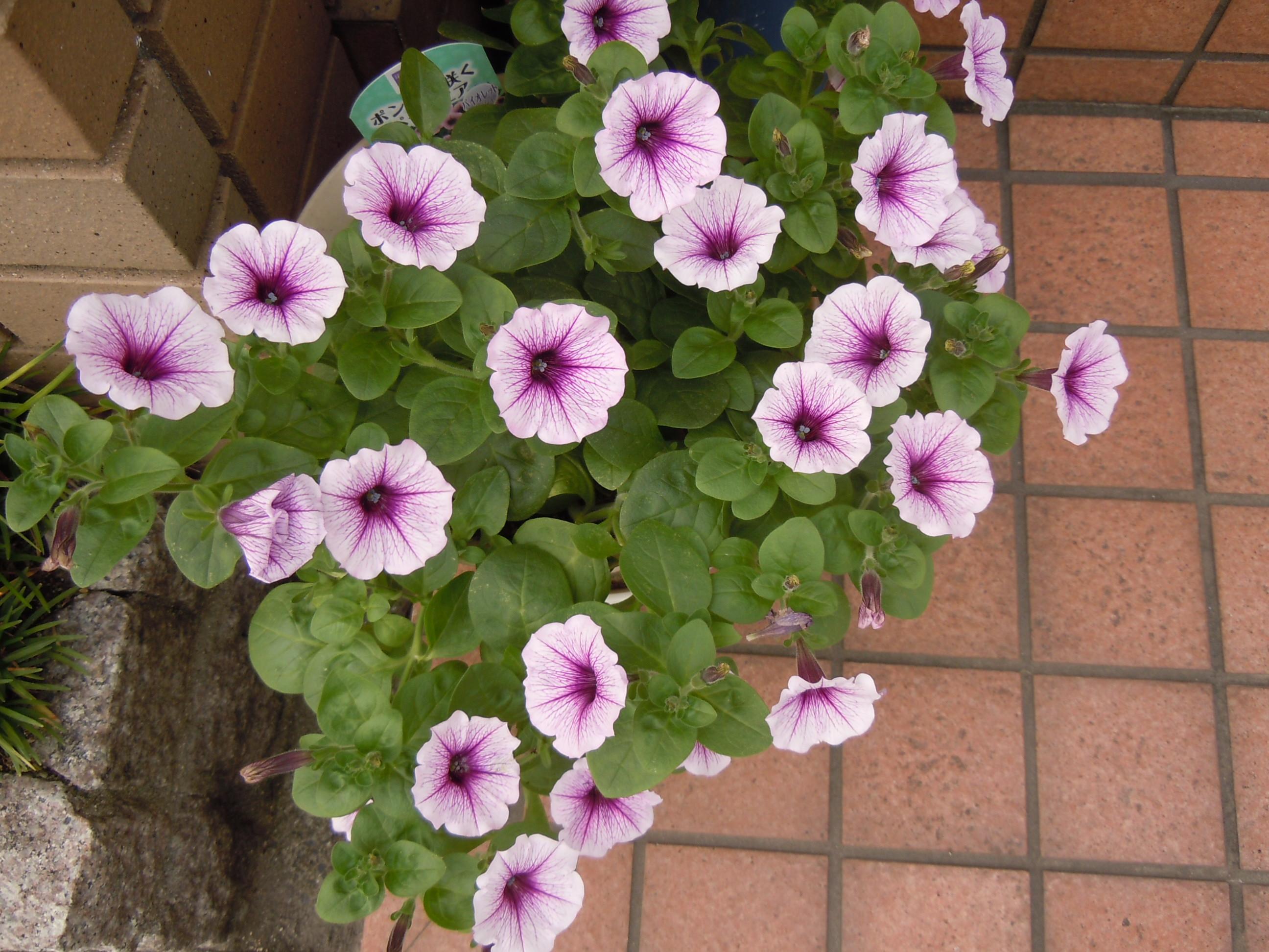 http://www.ige.tohoku.ac.jp/mirai/news/upload_items/201207/DSCN2968.JPG