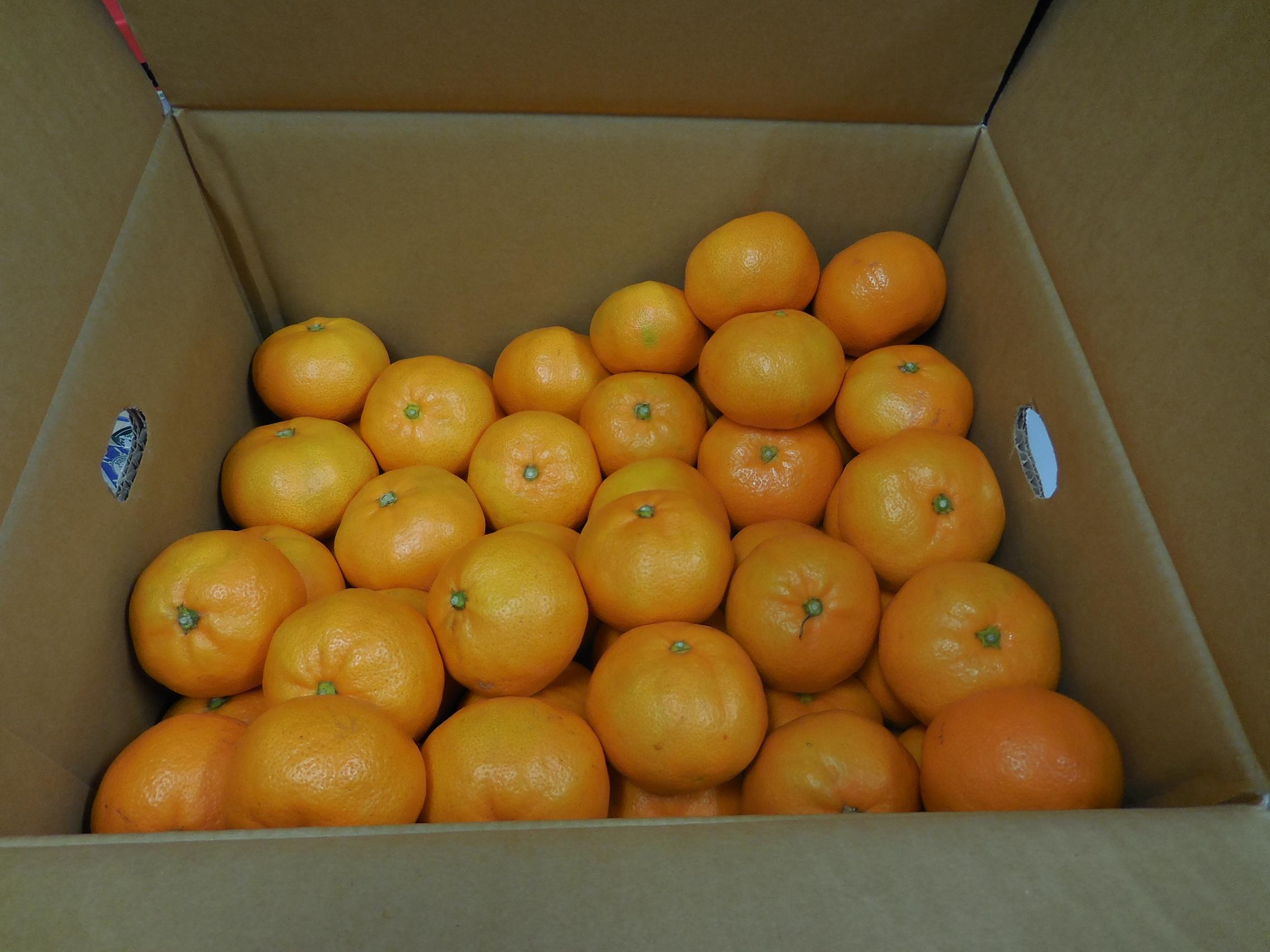 http://www.ige.tohoku.ac.jp/mirai/news/upload_items/201311/DSCN0667.JPG