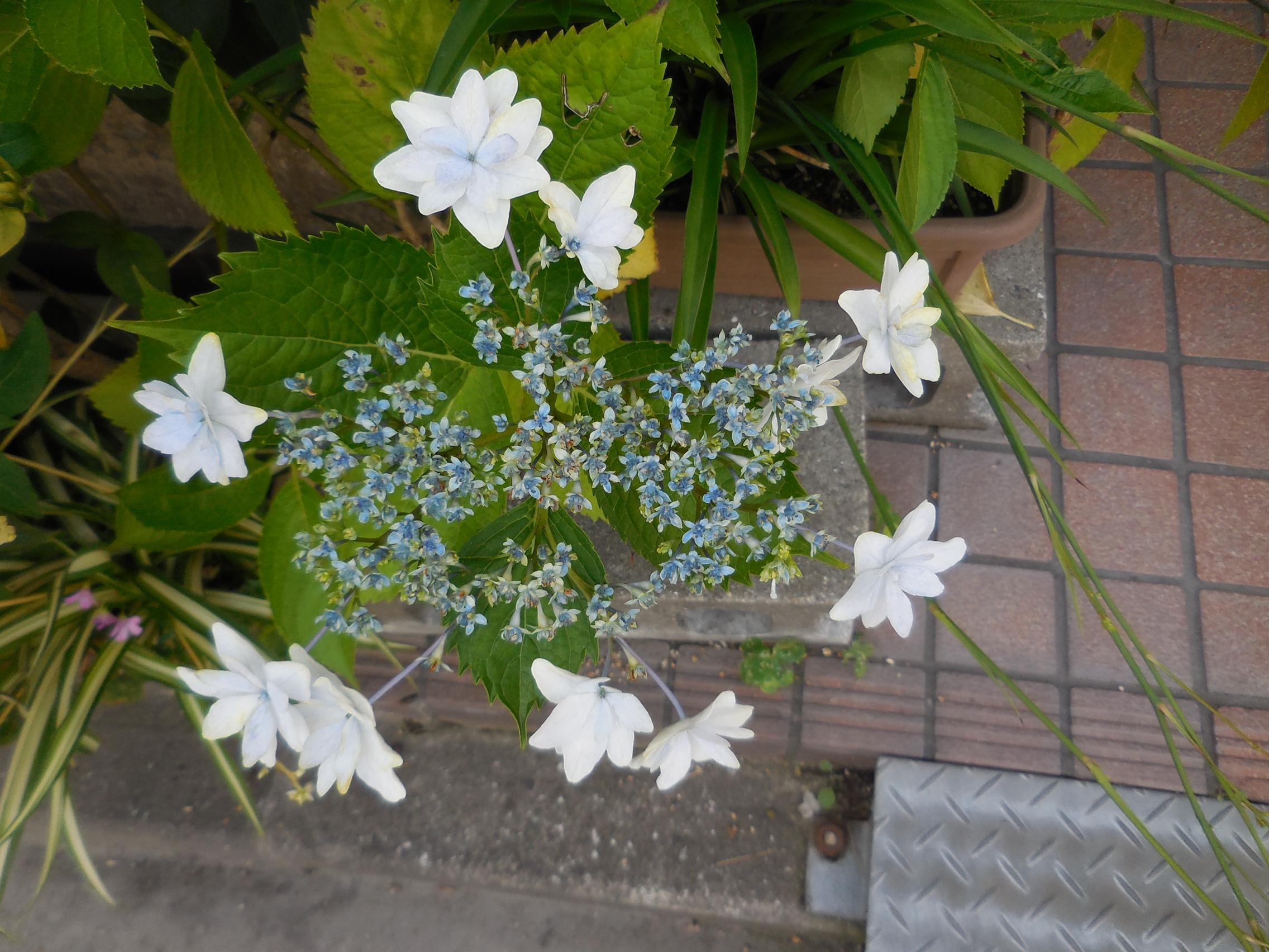 http://www.ige.tohoku.ac.jp/mirai/news/upload_items/201406/DSCN2815.JPG