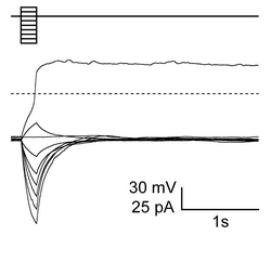 Fig1-2.jpg