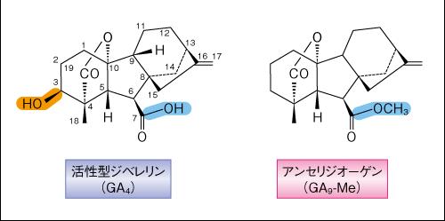 Matsuoka-Science-14.10.24-Fig.1.png
