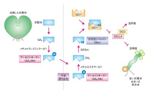 Matsuoka-Science-14.10.24-Fig.2.png