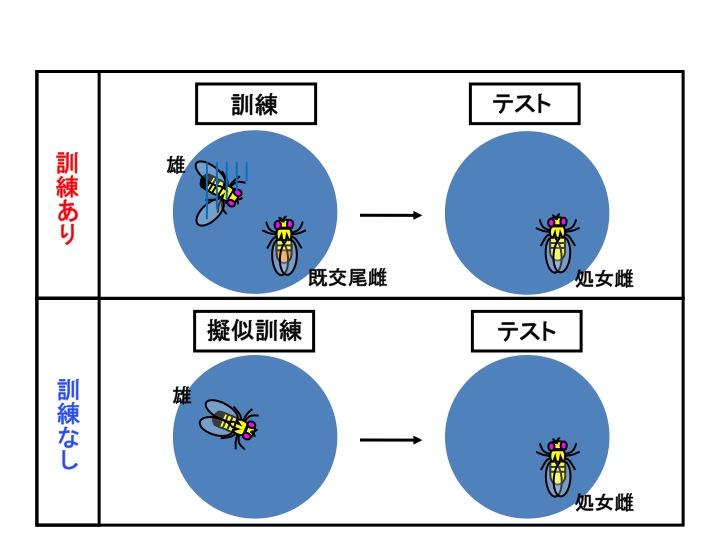 http://www.ige.tohoku.ac.jp/prg/genetics/study_report/upload_items/201512/%E3%82%B9%E3%83%A9%E3%82%A4%E3%83%891.jpg