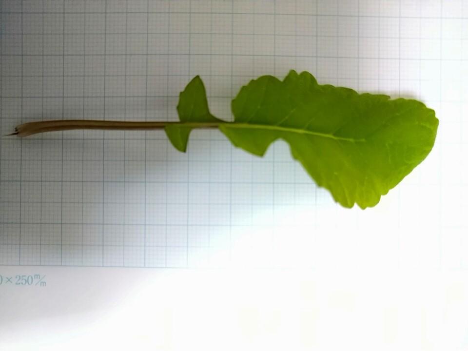 http://www.ige.tohoku.ac.jp/prg/watanabe/as-vegetable2020/images/20201102102452-2ec2de6ff638b4aa8325e66995f705ad3e8f688f.JPG