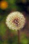 DSC_3069.jpgのサムネール画像のサムネール画像