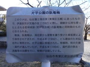 片平公園 臥竜梅 説明書.JPG