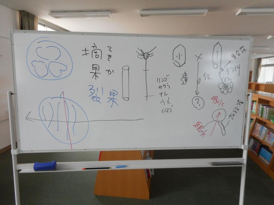 http://www.ige.tohoku.ac.jp/prg/watanabe/diary2/images/20190622151632-f46b9b83b02bd254ec10b29d2eb329e30ce0d795.JPG
