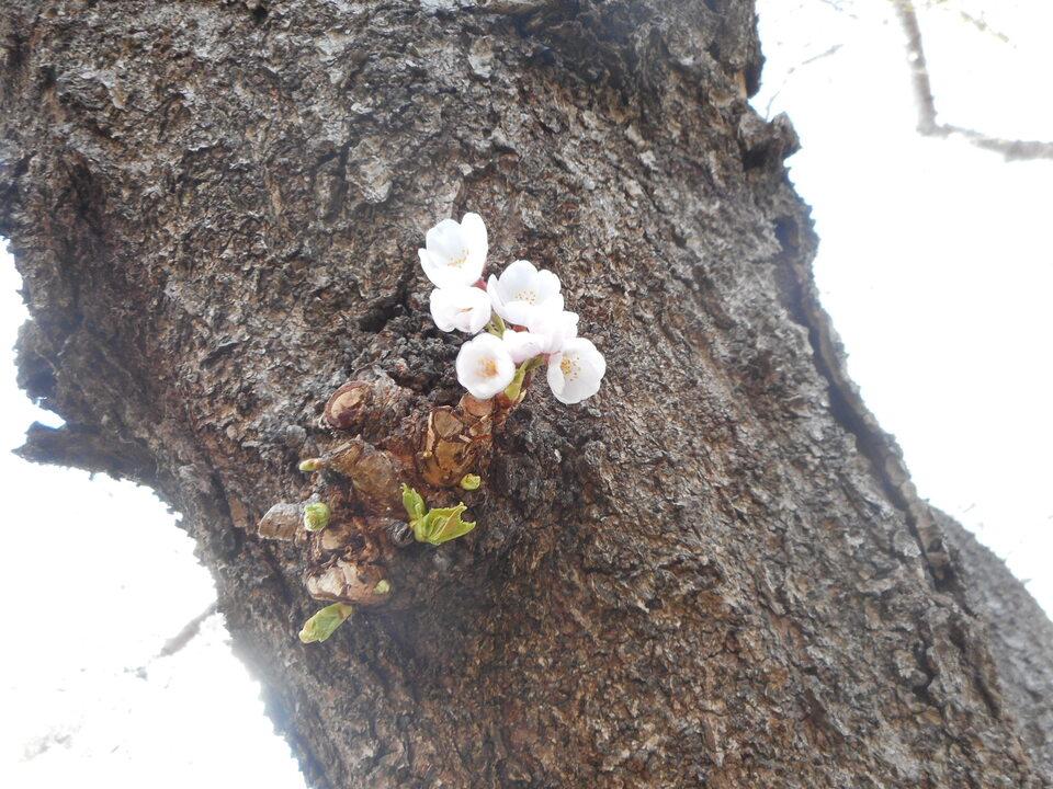 http://www.ige.tohoku.ac.jp/prg/watanabe/news2/images/20210409141216-11f167af909d1886fd0e929e1f419c94d3c767e6.JPG